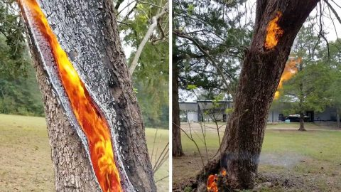 STUNNING VIDEO SHOWS TREE STRUCK BY LIGHTNING BURNING FROM INSIDE OUT Image