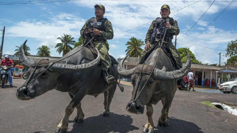 BUFFALO SOLDIERS! MILITARY POLICE CAPTURED RIDING ON WATER BUFFALO TO POLICE ISLAND Image