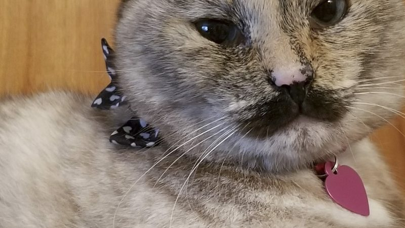 CHARLIE CAT-LIN: PUSS WITH A MOUSTACHE CAUSES INTERNET STORM Image