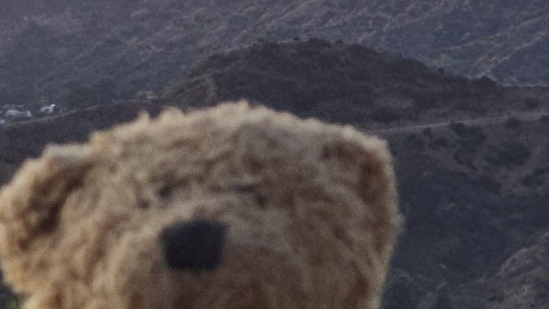 ALL ABOARD THE BEAR-O-PLANE; LITTLE GIRL'S TEDDY TRAVELS THE WORLD IN HER MEMORY Image