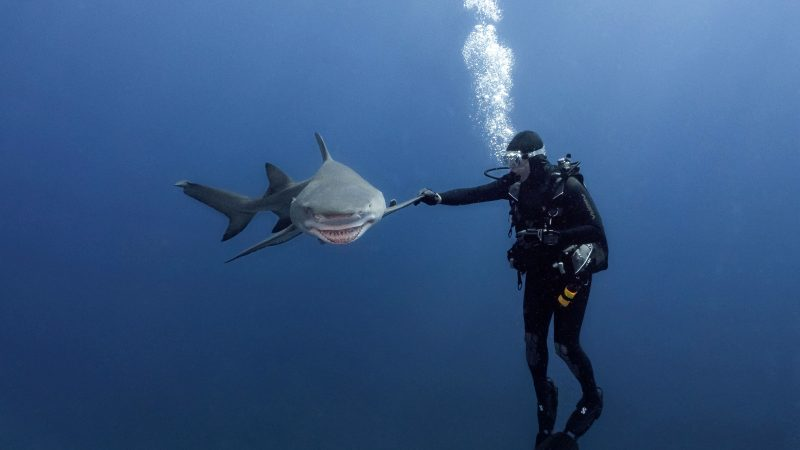 GIMME FIVE! AMAZING MOMENT SHARK HIGH FIVES DIVER Image