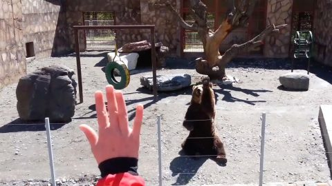 FRIENDLY BEAR WAVES BACK AT ZOO VISITORS Image
