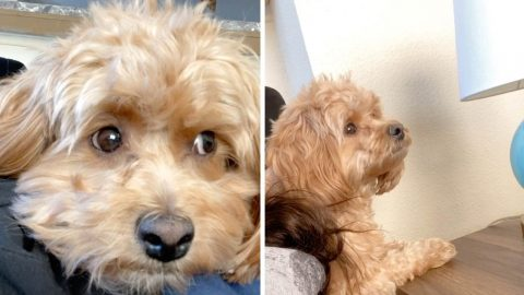 DISAPPROVING DOG REACTS TO OWNER SWEARING WITH RAGE AT NEW CALL OF DUTY VIDEO GAME Image