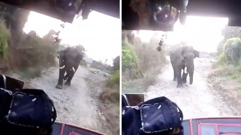 BUS DRIVER HAS INTENSE STAND-OFF WITH ANGRY ELEPHANT IN THE MIDDLE OF THE ROAD IN DRAMATIC FOOTAGE Image
