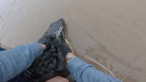 GOOD SAMARITAN FISHERMEN JUMP ON TO SEAL AS IT'S WADING INTO WAVES TO CUT PLASTIC NOOSE WRAPPED AROUND NECK Image