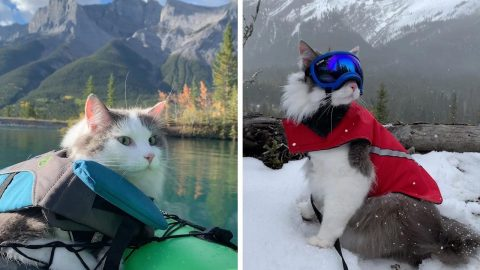 ADVENTUROUS KITTY BRAVES THE GREAT OUTDOORS BY KAYAKING AND HIKING IN PICTURESQUE VIDEOS Image