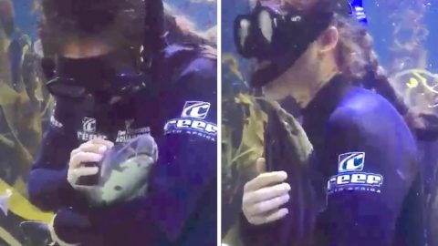 BABY SHARK: ADORABLE PYJAMA SHARK SWIMS INTO SCUBA DIVERS ARMS FOR TUMMY TICKLES AND HEAD SCRATCHES JUST LIKE A CAT Image