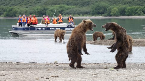 THE FIRST RULE OF FIGHT CLUB – BROWN BEARS HAVE THEIR CLAWS OUT Image