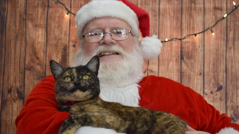 PURRR-FECT CHRISTMAS! CAT RESCUE CENTRE VISITED BY SANTA CLAWS SO FELINES COULD TELL HIM THEIR WISH TO BECOME ADOPTED FOR CHRISTMAS Image