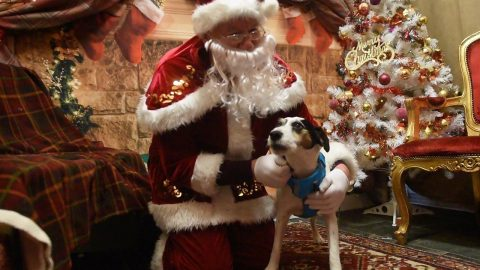 SANTA PAWS! SANTA'S GROTTO OPENS ITS DOORS FOR CHRISTMAS - BUT IT'S JUST FOR DOGS Image