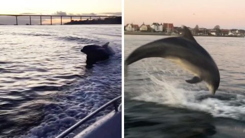 PLAYFUL DOLPHIN SURROUNDS BOAT AND PUT ON SHOW BY LEAPING OUT OF WATER Image