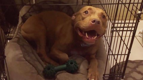 HEARTWARMING VIDEO SHOWS SCARED DOG BEING SUNG TO SLEEP WITH A SWEET LULLABY Image