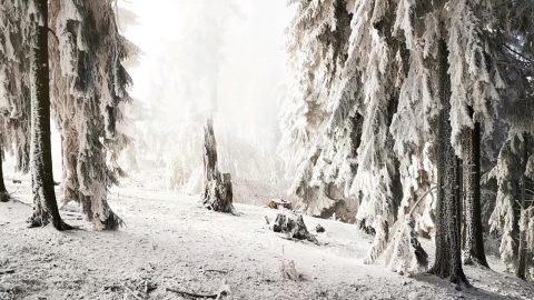 PHOTOGRAPHER CAPTURES 'ENCHANTED' SNOWY FOREST THAT LOOKS OUT OF FAIRY TALE Image