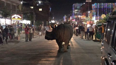 RHINO OUT ON THE TOWN! THIS RHINO HAS BEEN CAPTURED WALTZING THE STREETS Image