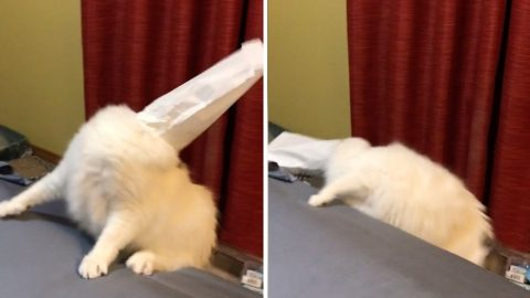 'CLUMSY' CAT GETS BAG STUCK ON HIS HEAD AND FALLS OFF BED Image