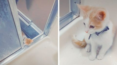 KITTEN WITH HEAVY DOSE OF SEPARATION ANXIETY GETS INTO SHOWER WITH OWNER Image
