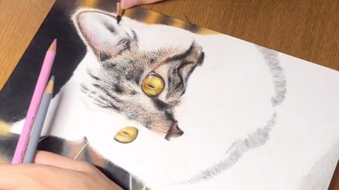 DRAWING OR PHOTOGRAPH? STUDENTS HYPER-REALISTIC FELINES - WHICH TAKE 40 HOURS TO COMPLETE - BAFFLE THE INTERNET Image