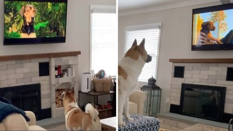 ADORABLE PUP WANTS NOTHING MORE THAN TO WATCH HIS DOG FRIENDS IN HIS FAVOURITE FILM Image