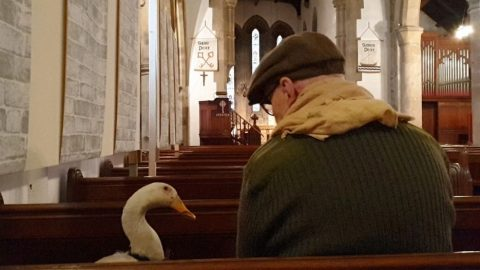 GIVE US THIS DAY OUR DAILY BREAD! COUPLES PET DUCK LIVES IN THE HOUSE WITH THEM - AND EVEN ACCOMPANIES THEM TO CHURCH Image