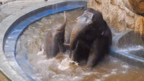ELEPHANT HAS THE TIME OF HIS LIFE MAKING A SPLASH Image