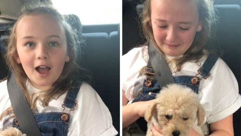 EMOTIONAL MOMENT GIRL FINDS OUT THE PUPPY SHE THOUGHT WAS FOR A FRIEND IS ACTUALLY FOR HER Image