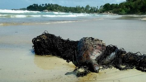 HEART-WRENCHING MOMENT SEA TURTLE FOUND TANGLED IN FISHING NET AND COVERED IN OIL SLUDGE Image