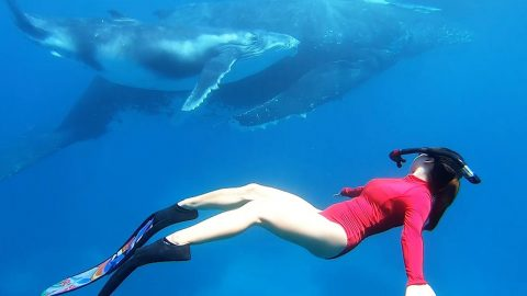 A WHALE OF A TIME: FREEDIVER INTERACTS WITH THE OCEANS' GENTLE GIANTS Image