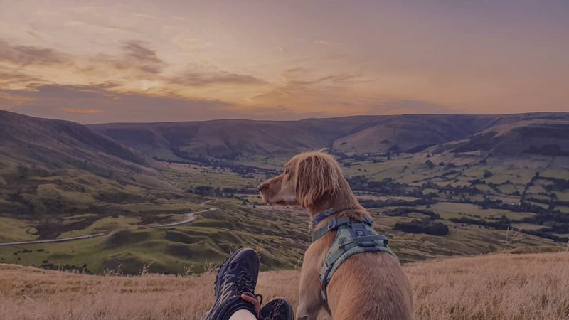 A RUFF GUIDE - WELL-TRAVELLED COCKER SPANIEL REVEALS HIDDEN GEMS ACROSS UK Image