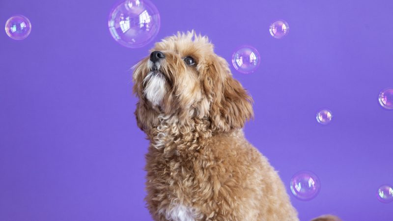 ADORABLE POOCHES POSE UP PLAYING WITH BUBBLES Image