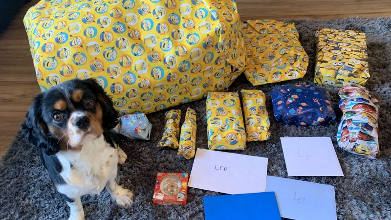 HAPPY WOOFDAY! DOG BECOMES INTERNET CELEB AFTER OWNER POSTS PICTURES OF HIS FIRST BIRTHDAY CELEBRATIONS Image