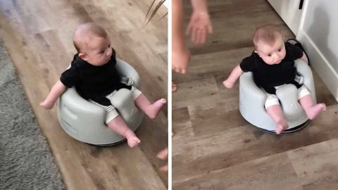 ADORABLE BABY RIDES ROOMBA AROUND THE HOUSE Image