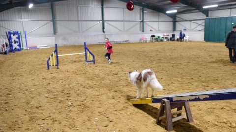 ANYTHING IS PAW-SIBLE! 11 YEAR OLD IS UK'S YOUNGEST DOG AGILITY TRAINER WHO STARTED AGED FIVE AND HAS ALREADY WON MORE THAN 21 AWARDS Image