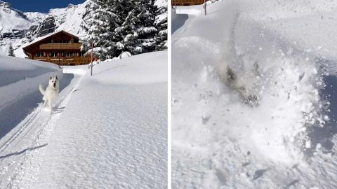 ADORABLE MOMENT DOG JUMPS INTO ONE-METRE-HIGH SNOW LAYER Image