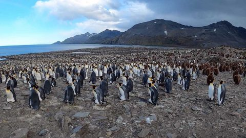 SPOT THE PENGUIN! EPIC PHOTOS SHOW THOUSANDS OF PENGUINS AS FAR AS THE EYE CAN SEE Image