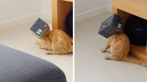 CAT GETS TISSUE BOX STUCK ON HEAD IN AMUSING VIRAL VIDEO Image