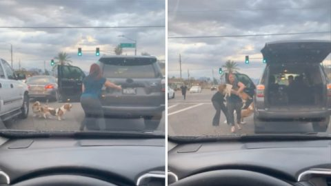 WOMAN RISKS LIFE ON BUSY ROAD TO RESCUE STRAY PUPPIES Image