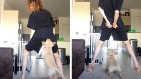 PUPPY CONFUSES TWERKING BUTT FOR CHEW-TOY IN HILARIOUS TIKTOK FAIL Image