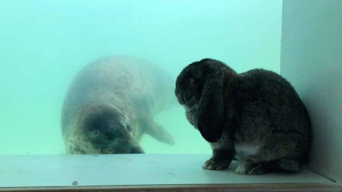 I SEALLY LIKE YOU! RABBIT SHOW HIS LOVE FOR LOCAL SEALS Image