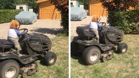 IRISH GRAN TAKES TEDDY ON ADVENTURES TO KEEP GRANDKIDS ENTERTAINED FROM AFAR Image