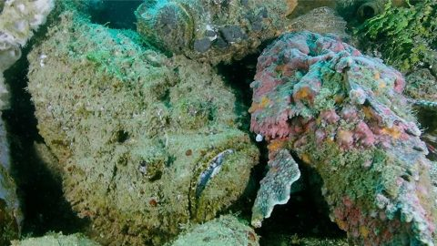 DIVER GETS VERY CLOSE TO 'MOST VENOMOUS FISH IN WORLD' Image