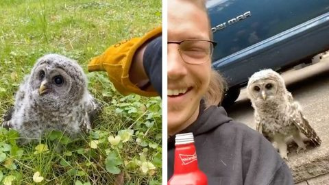 MAN BEFRIENDS ADORABLE BABY OWL IN HILARIOUS VIRAL VIDEO Image