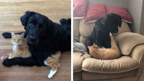 UNLIKELY FRIENDSHIP FORMED BETWEEN CAT AND DOG WHO ARE INSEPARABLE Image