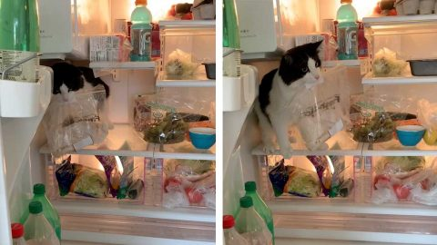 NAUGHTY KITTEN COULDN'T WAIT TO GOBBLE UP SOME TURKEY STRAIGHT FROM THE FRIDGE Image