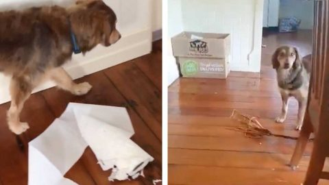 CHEEKY DOG DESTROYS A ROLL OF PAPER TOWELS AND PULLS AN ENTIRE PALM FROND INTO THE HOUSE Image