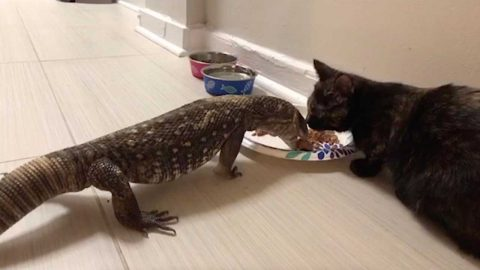 CAT AND LIZARD HAVE ADORABLE FRIENDSHIP Image