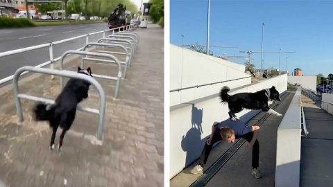 DARING DOGGO PIONEERS BARK-OUR WITH NIMBLE FOOTWORK AND BOUNDING LEAPS IN SERIES OF ATHLETIC VIDEOS Image
