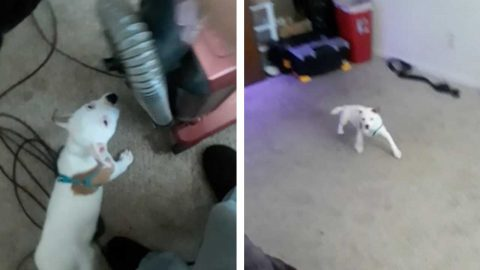 CURIOUS PUPPY HILARIOUSLY REACTS TO THE VACUUM CLEANER FOR THE FIRST TIME Image