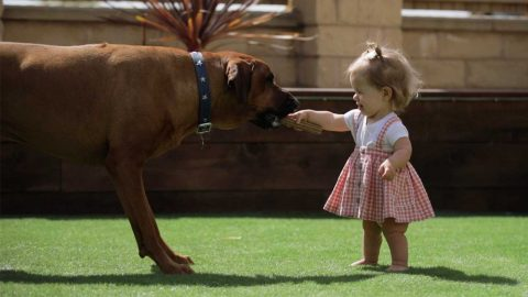 ADORABLE TODDLER WITH DWARFISM TAKES FIRST STEPS THANKS TO DOTING DOG Image