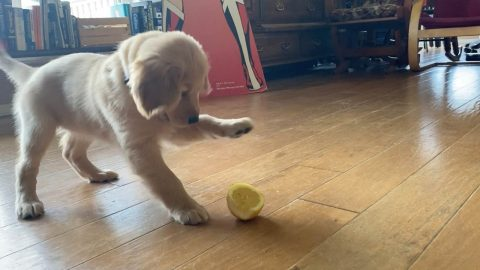 ADORABLE PUP EXPERIENCES THE SOURNESS OF A LEMON FOR THE FIRST TIME Image