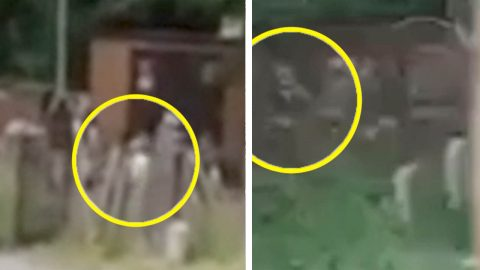 SO CAN YOU SPOT THE GHOST THIS MEDIUM CLAIMS INTERRUPTED HER LIVESTREAM IN BROAD DAYLIGHT? Image